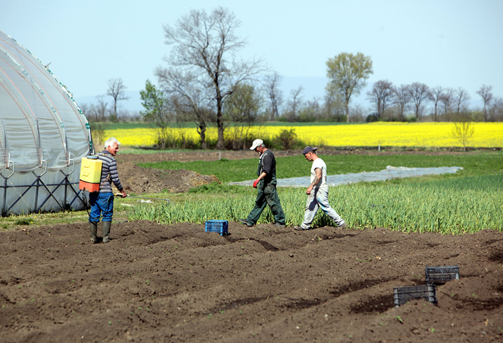 Spring planting gets under way, with help from the EU and FAO